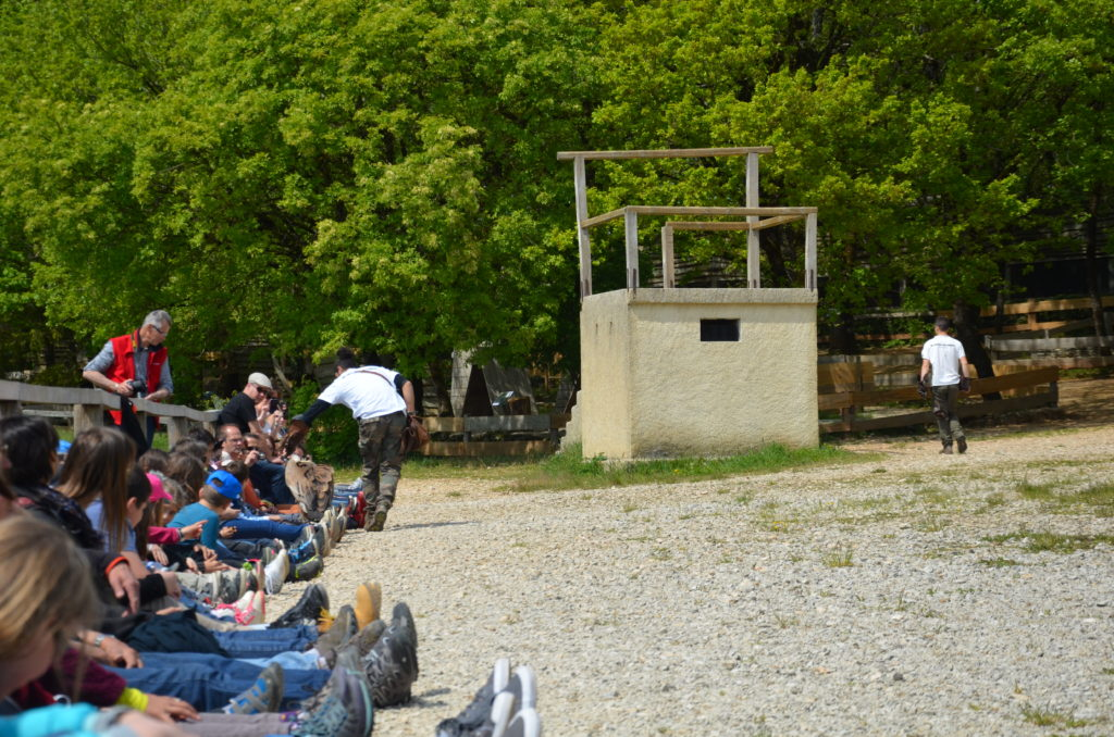 The audience is sitting down, while a handler lets a raptors walk over everybodies legs. To visualise Dordogne with kids