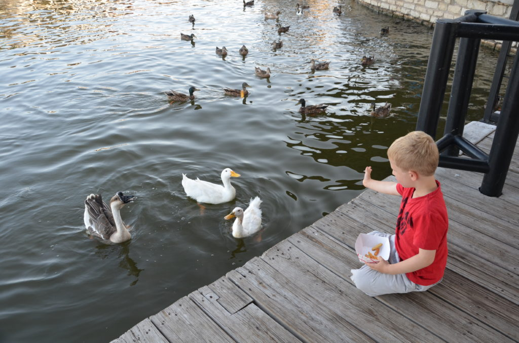 To show how Yuri is feeding the animals in the lake. That there were not only ducks, but also geese, catfish and turtle's.