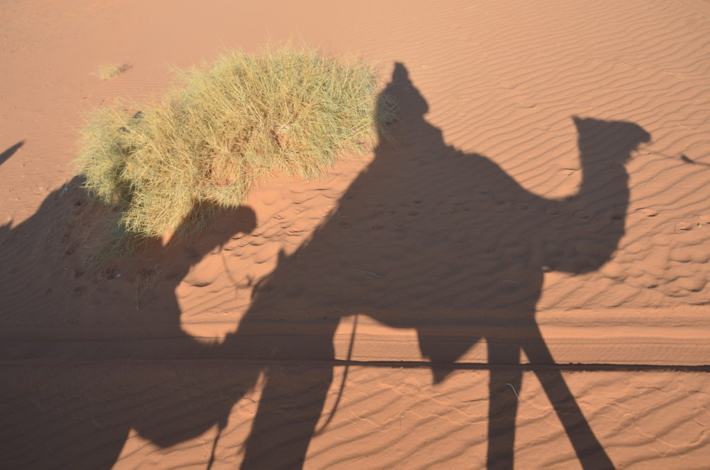 To show a picture from a thing on our tour through Jordan. The shadows of 2 camels with people on them. Red sand and some grass.