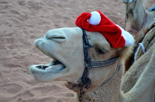 To show a funny picture from Christmas in Jordan. A camel head with a Santa hat on it.