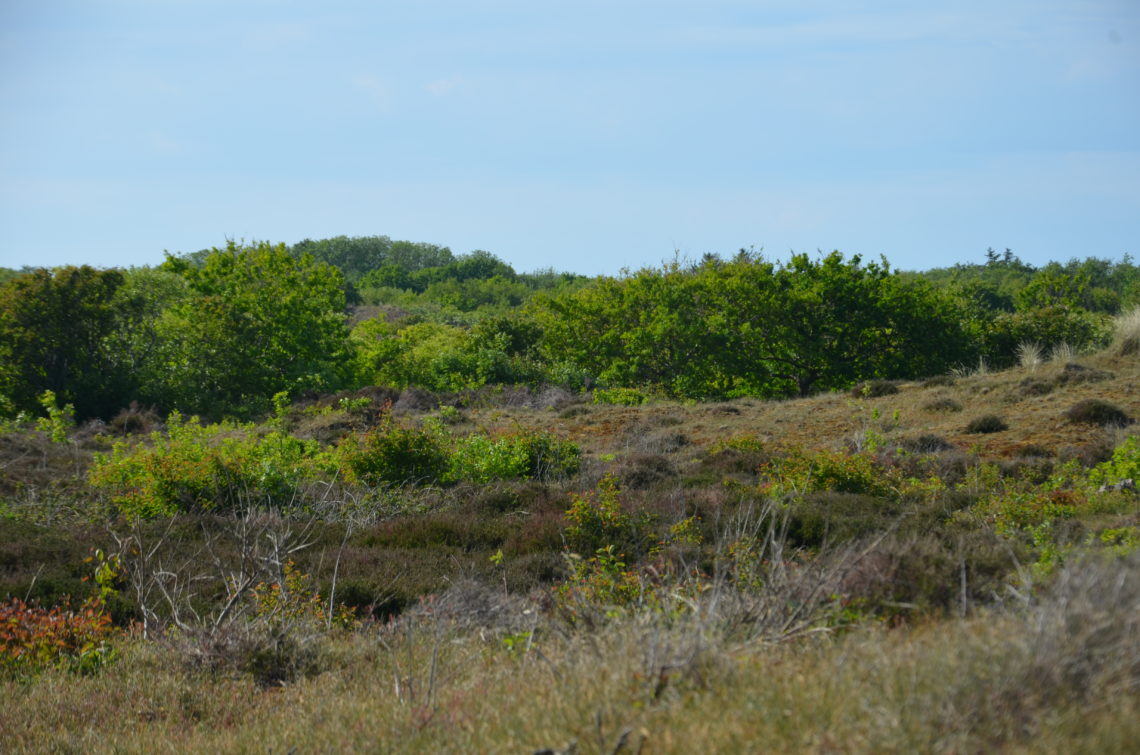 Dunes at the National Park Duinen van Texel