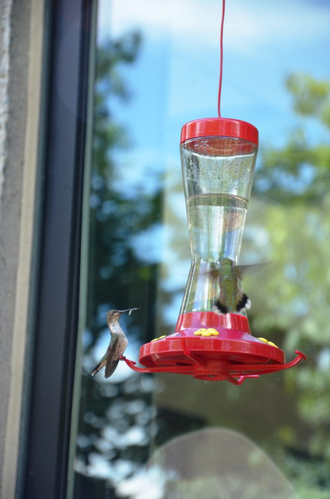 Hummingsbirds