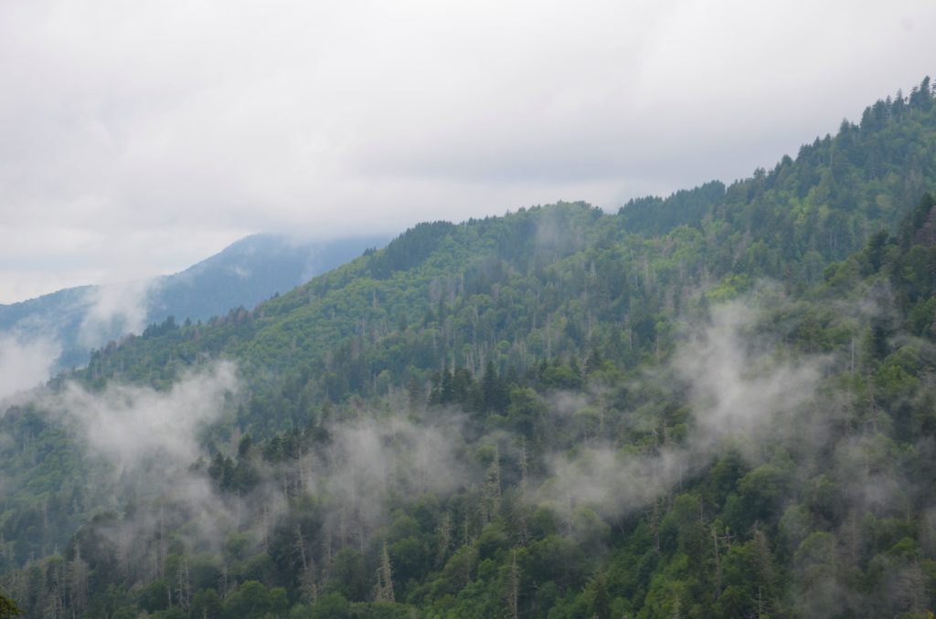 Fog at the Great Smoky Mountains