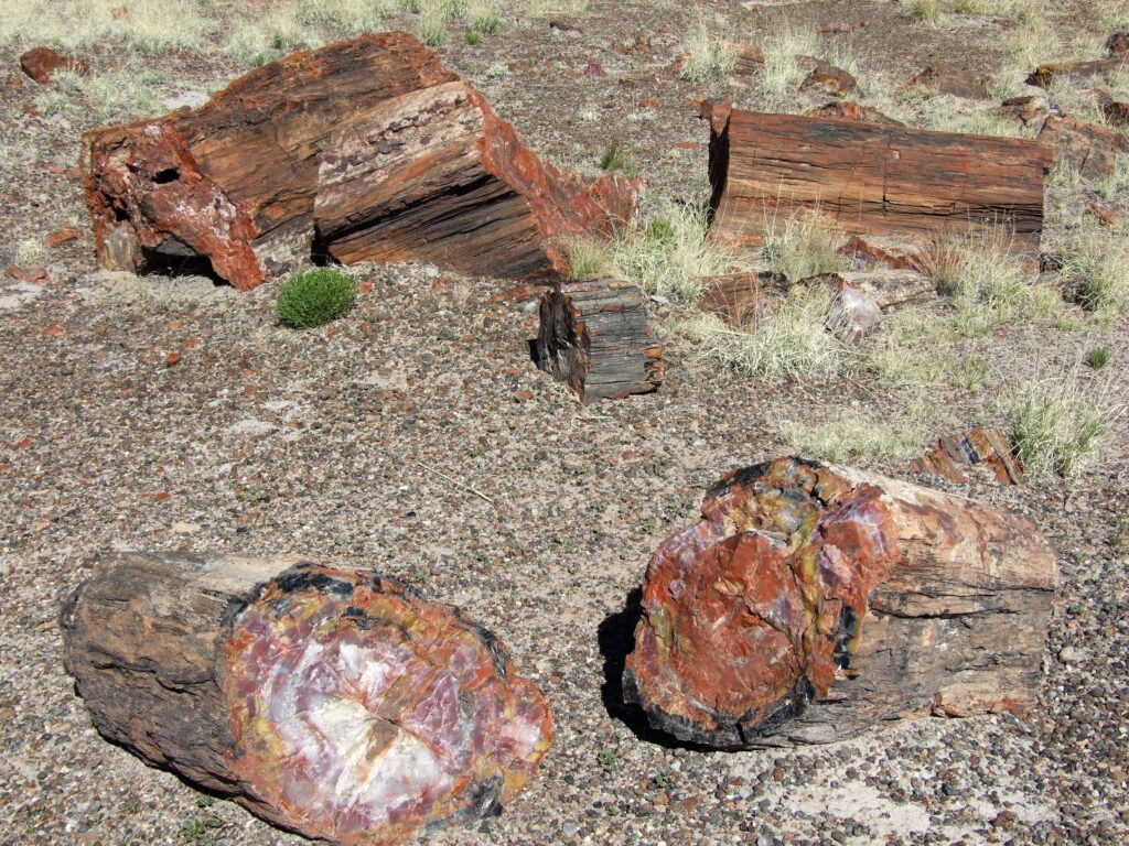 Petrified logs jam, several petrified logs scattered around.