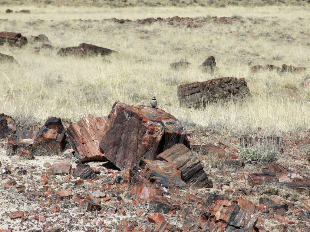 Petrified logs scattered everywhere in the grassland.