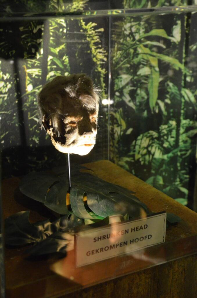 A shrunken head on a stick in a leaf, behind glass.