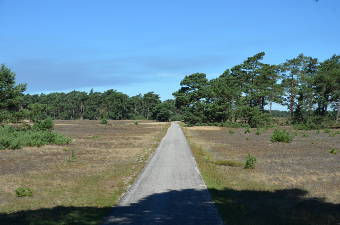 A path true the heathland and forest