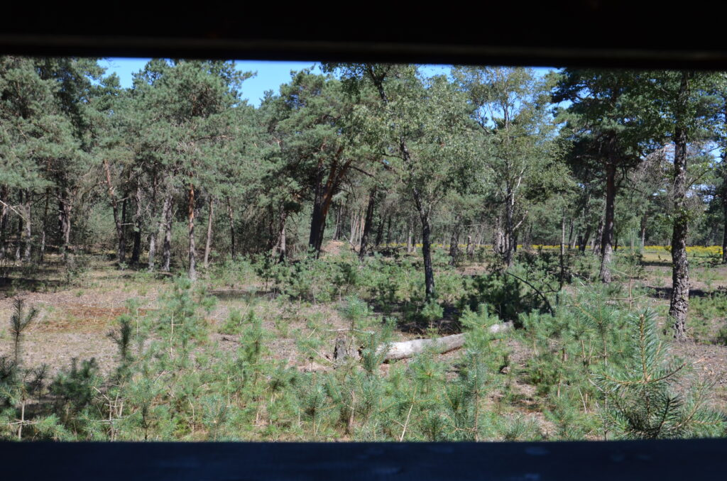 The view through the observation hut. Wood on the upper and down side of the photo, in between forest.