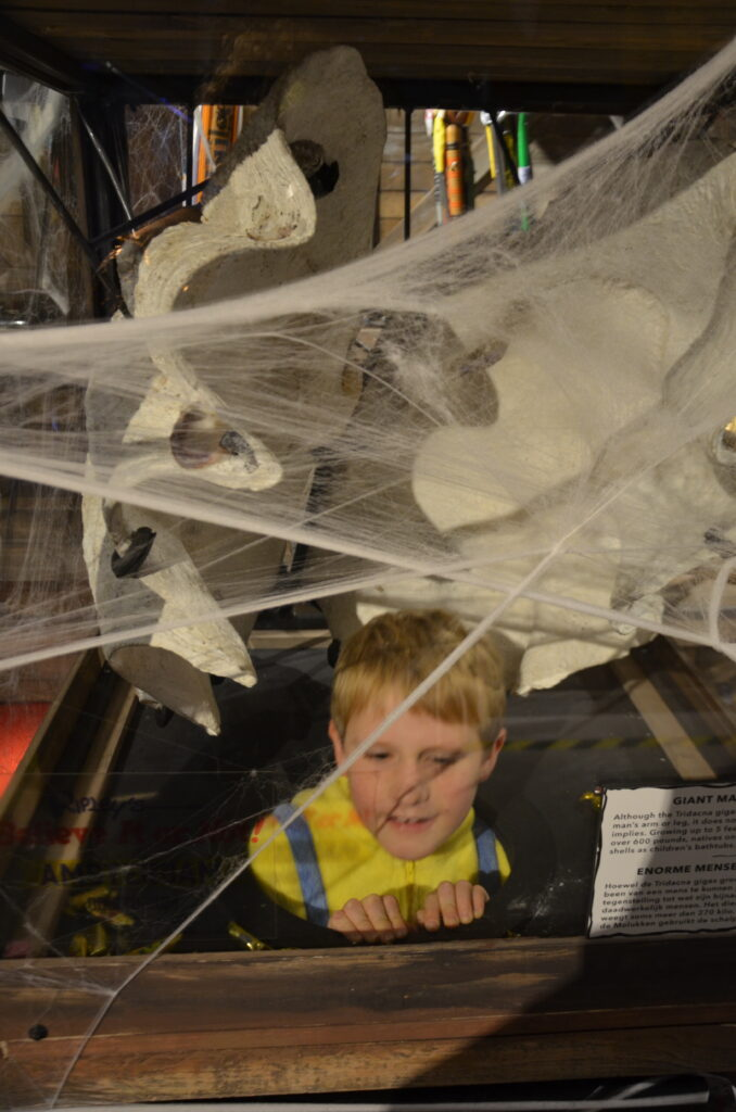 Yuri searching for candy, between the cobwebs. He's in a display with huge shells.