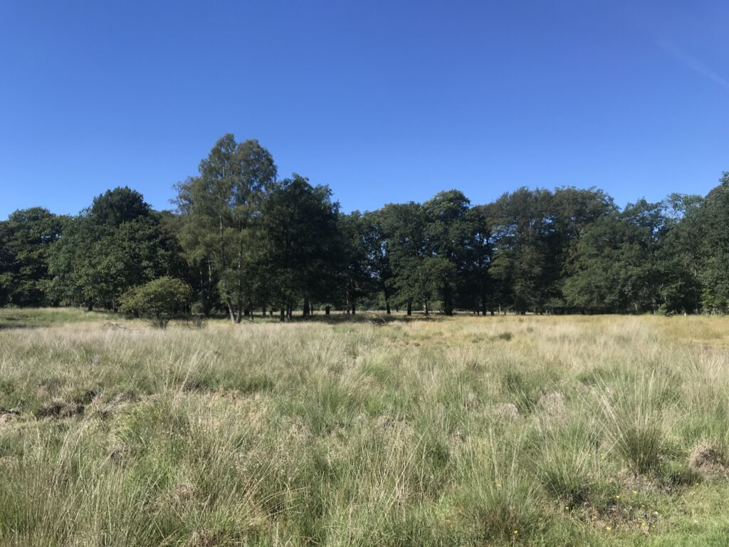 Grassland and forest, Forest in the back
