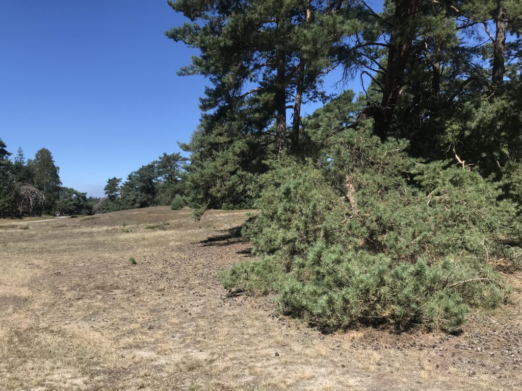 Heathland and trees
