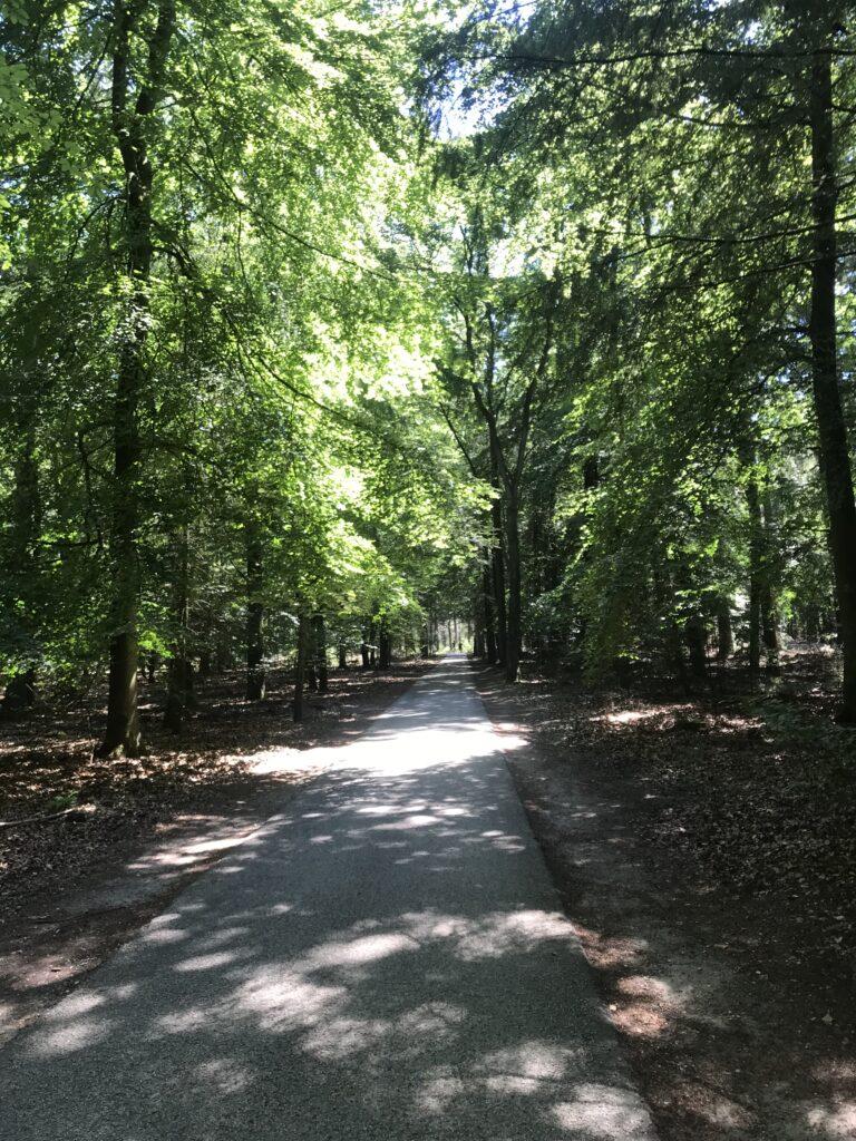 A biking path through the forest