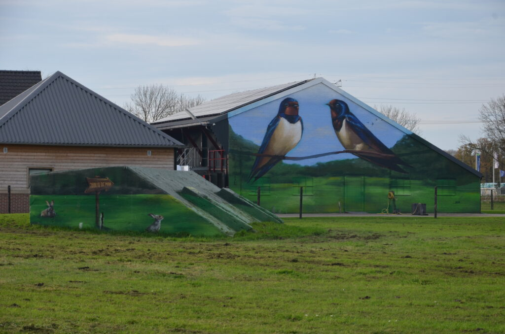 Swallows and a bunny , on the shed and a bunker of a farm