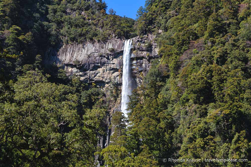 Nachi Falls a cliff where a small waterfall drops down from, disappearing between the trees.