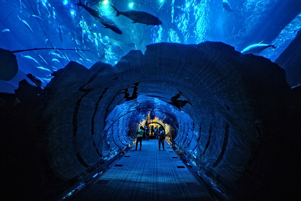 Dubai Aquarium, people walking through a tunnel, above and on the sides the water with fish