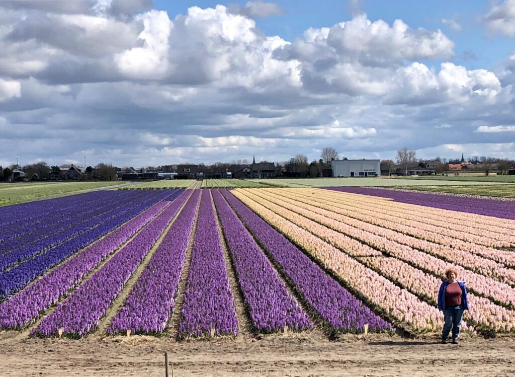 Hyacinth field in pink, purple and blue with me on the right in front