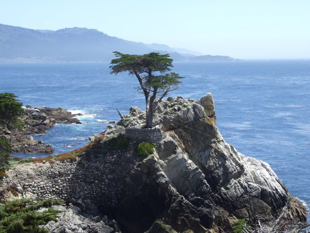 The Lone Cypress at 17 Mile Drive