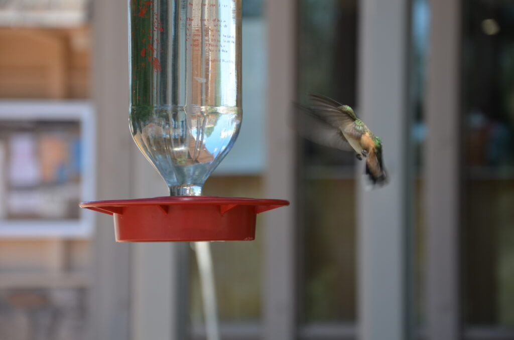 One of the many hummingsbirds, humming in the air near a feeder